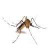 Insecticide adulticide